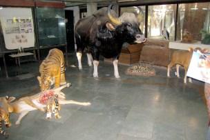 03.8 animal sculptures