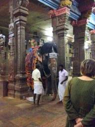 11.7 elephant inside temple