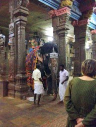 11.7 elephant inside temple