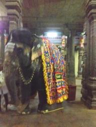 11.7 side view elephant