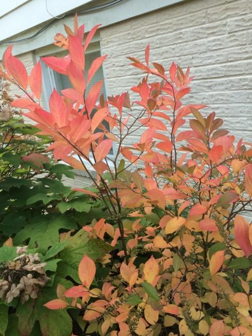 September2014andfieldwildflowers 009
