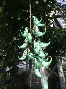emerald creeper (2)