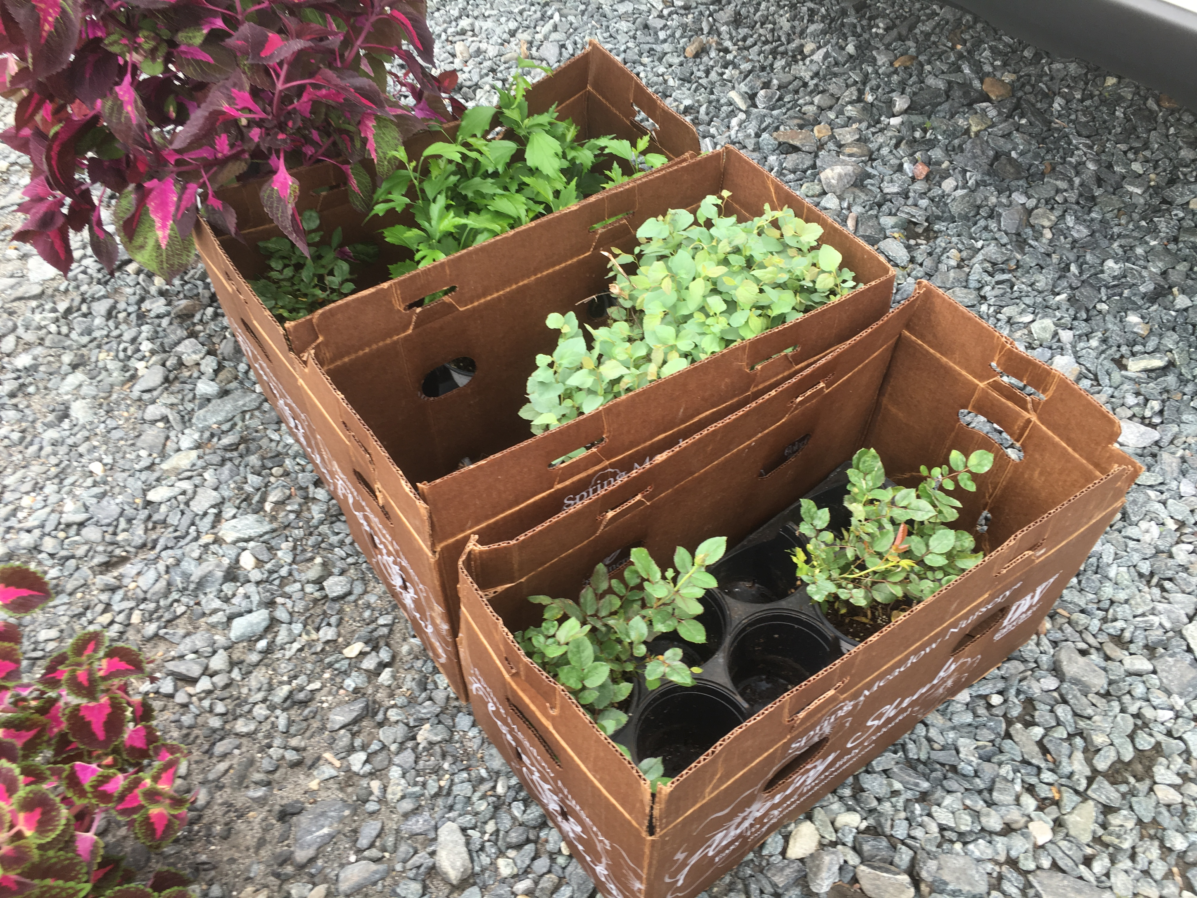 A Day in the Life of a Garden Writer: The Hunt Country Gardens and ...