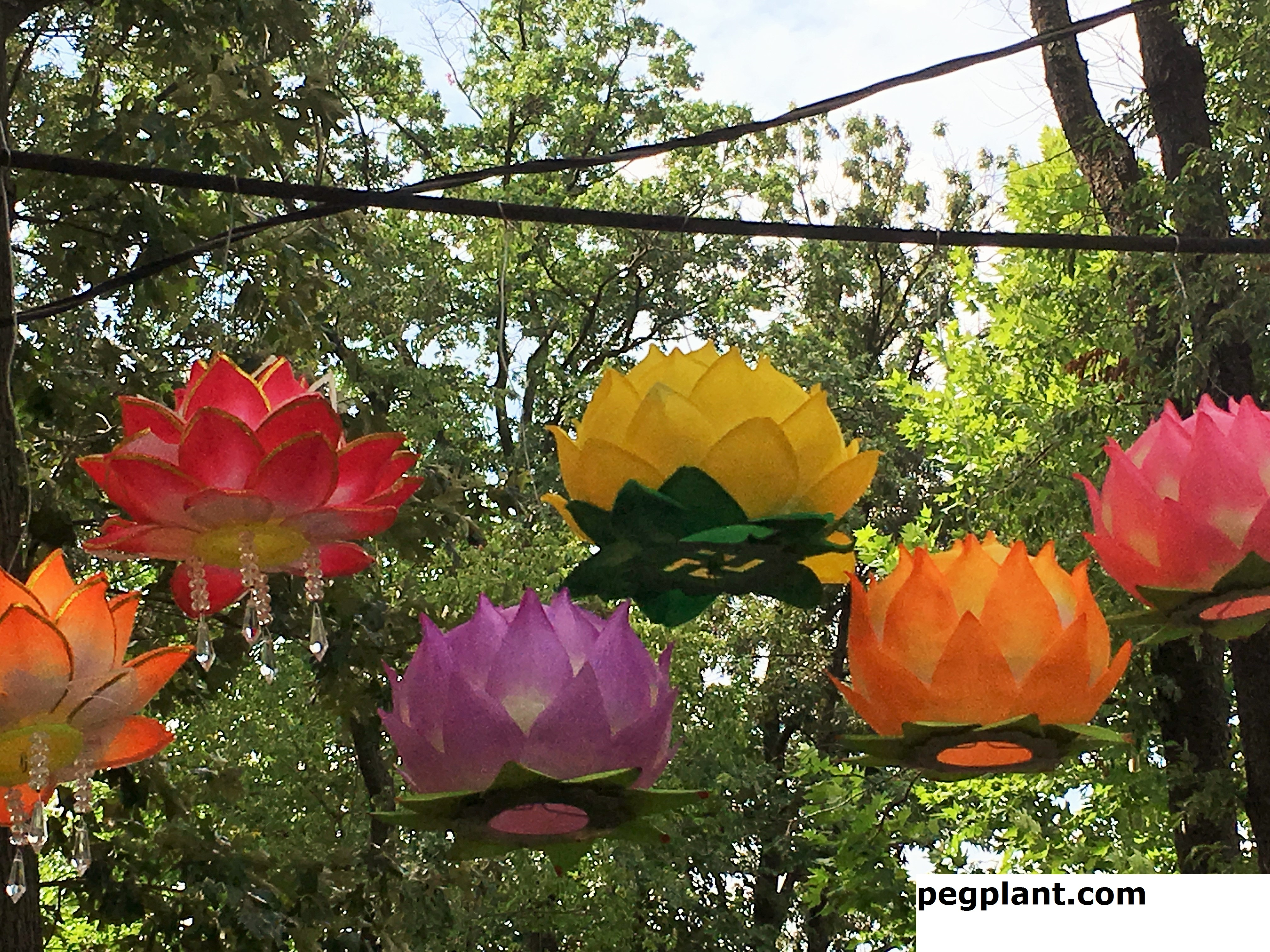 Amazing lotus flowers and water lilies at kenilworth park - Kenilworth park and aquatic gardens ...