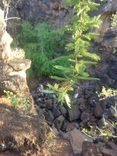 Seguindo para Las Grietas - Natureza acha seu espaço