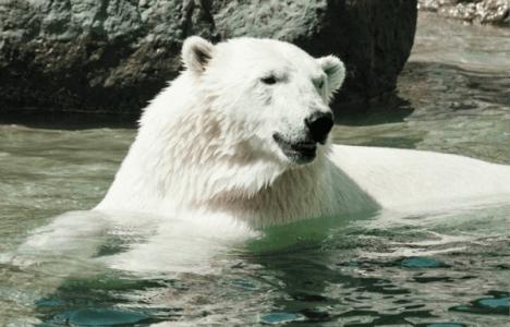 Assiniboine Park Zoo Journey to Churchill