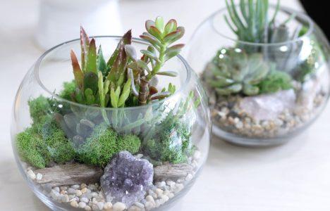 Verde Shop Terrarium