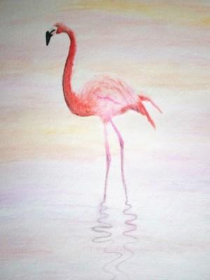 Flamant rose aux crayons aquarelles