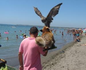 njeriu me shqiponje