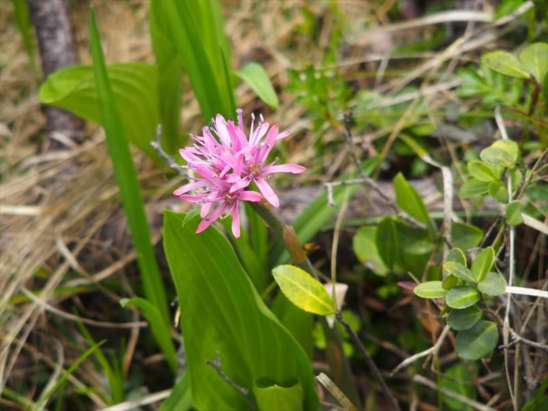 神仙沼の湿地に咲いていた花