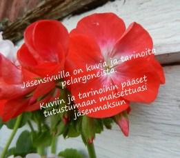 jasensivumainos