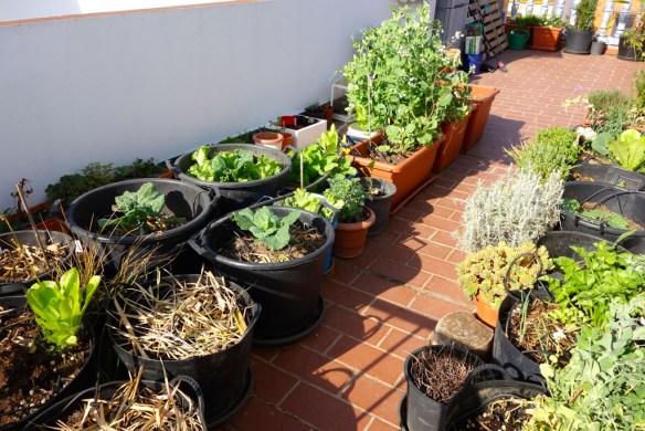 La terrasse, au troisième niveau, où Alfredo cultive avec passion ses légumes  dans une terre à base de compost maison. Alfredo est un amoureux de la nature et avide de connaissances sur le jardinage biologique. © Fabienne Bodan
