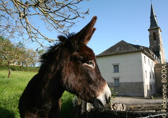 L'âne, ce compagnon des pèlerins...