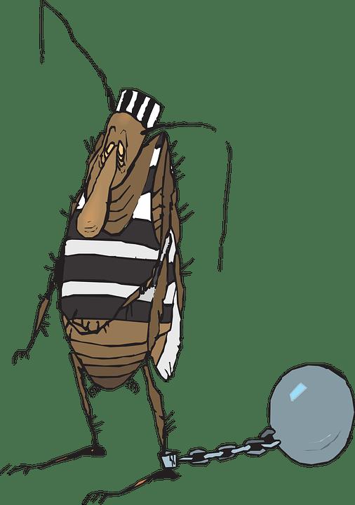 Images gratuites sur Pixabay. Licence Creative Commons CC0.