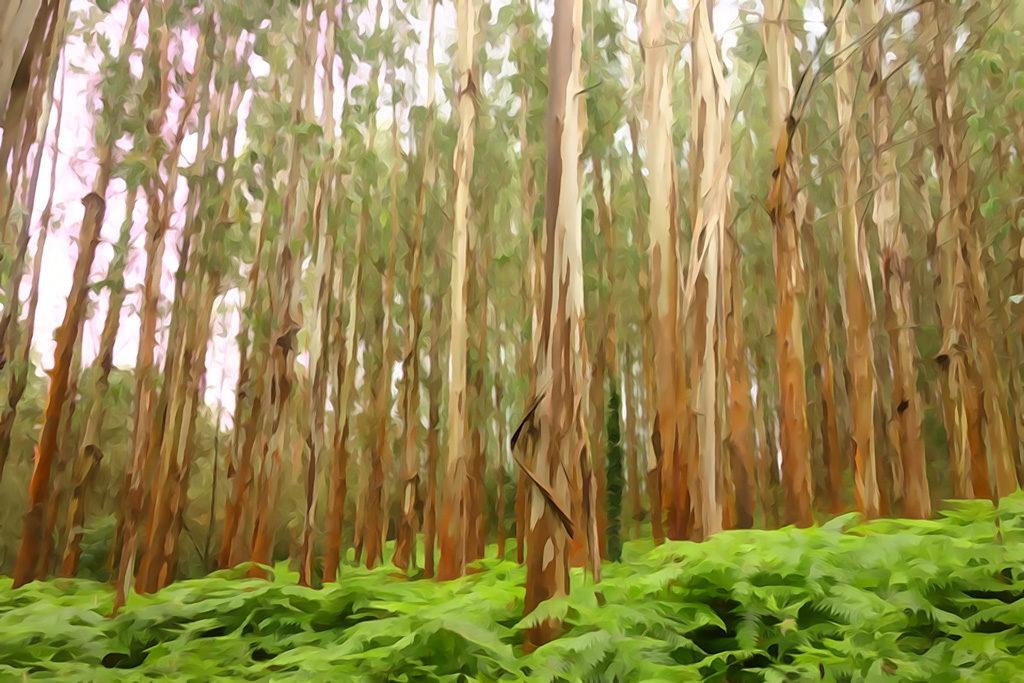 Camino inglés, le bosque encantado entre Sigueïro et Saint-Jacques-de-Compostelle