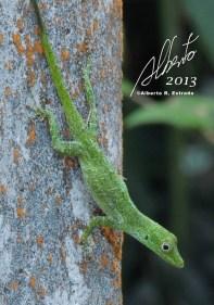 Lagartijo verde de Puerto Rico (Anolis evermani) — en El Yunque National Rainforest.