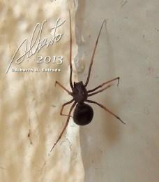 Una araña en un rincón