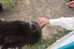 Feeding the Herd Mammaw
