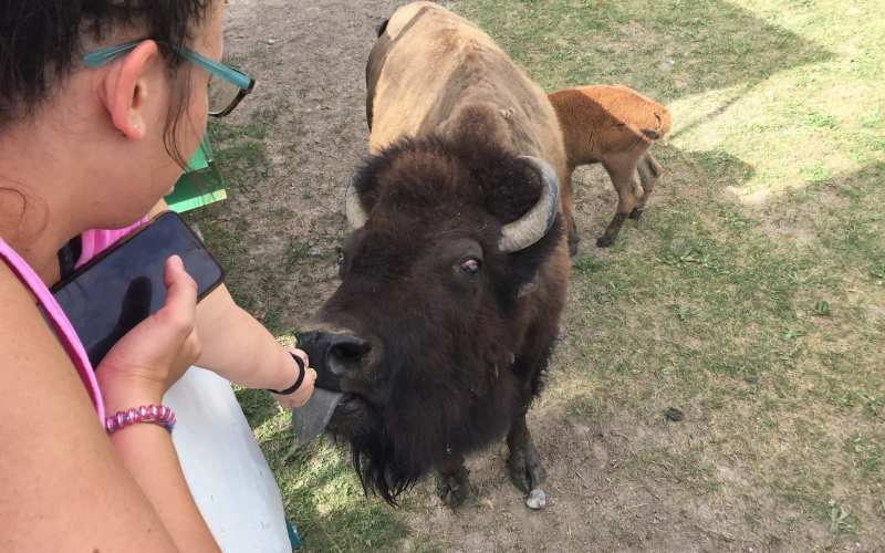 Day Eight: Homebound however Terry Bison Ranch is a Must see