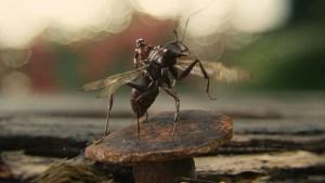 Ant-Man-Microverse-Photo-Antony-on-Rock