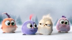 angrybirds-hatchlings