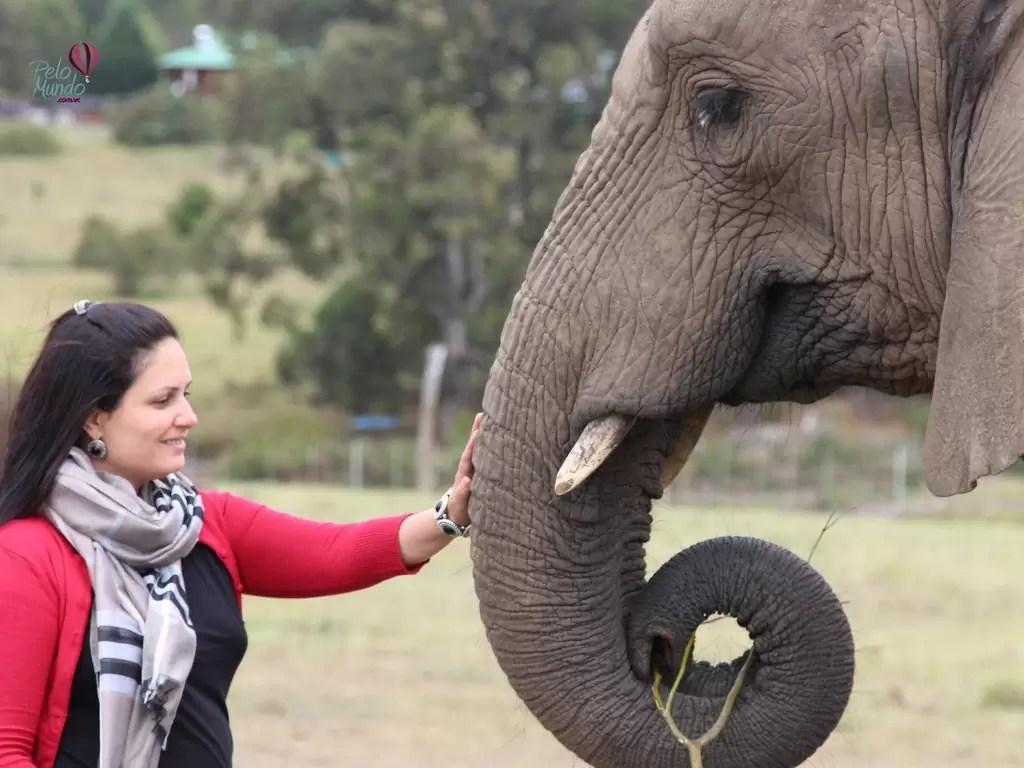 Elefantes do Santuário lindos