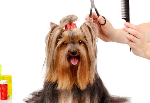 Cómo influye el peluquero en el comportamiento del perro