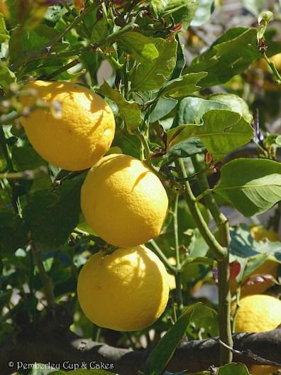Lemon Bundt Cake {lemons}