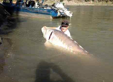 Giant Sturgeon Fishing Charters