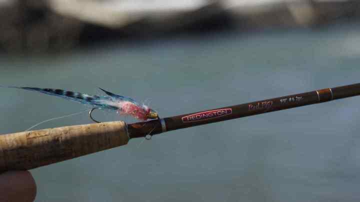 Pink Belly Fly on a Redington Fly Rod