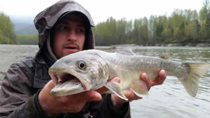 Bull Trout fly fishing in BC Canada