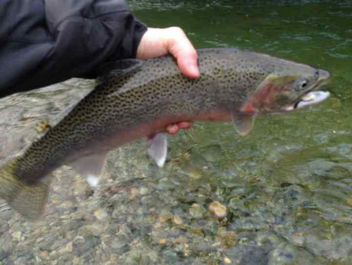 Cutthroat Trout fly fishing in BC