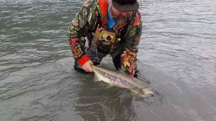 Fishing Chum Salmon in Canada