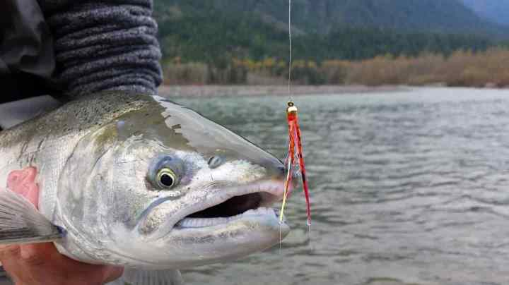 Coho Salmon Fly Fishing tours in British Columbia