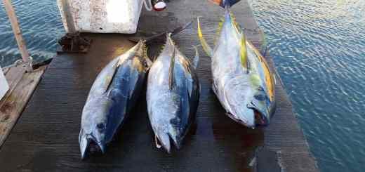 Ahi tuna fishing charters in Hawaii