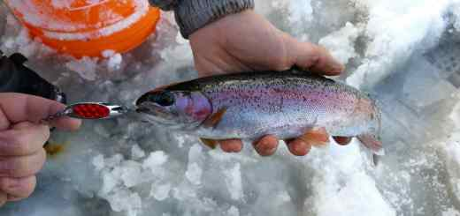 Great Rainbow trout Ice fishing in BC