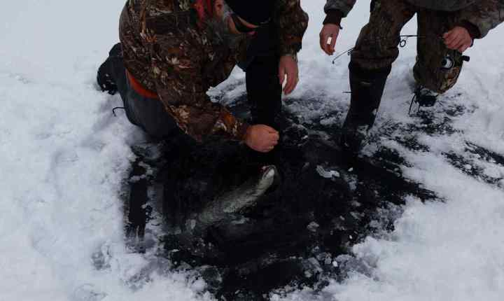 Ice fishing Bull Trout