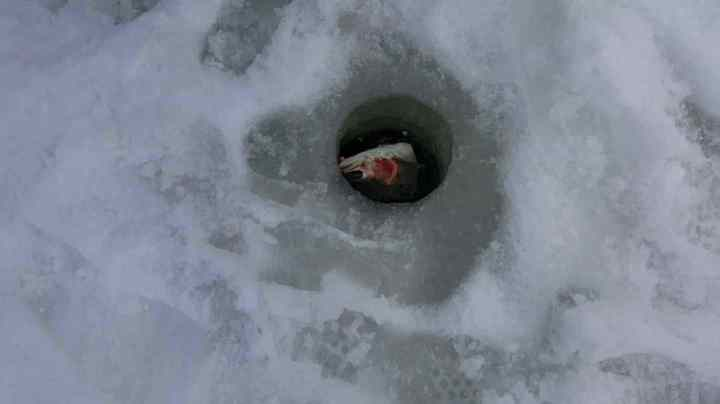 Big Rainbow Trout in an Ice fishing hole