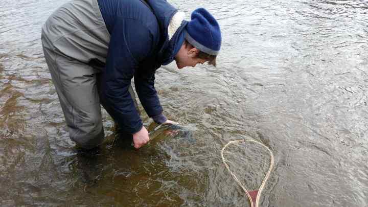 Pemberton Fishing Reports