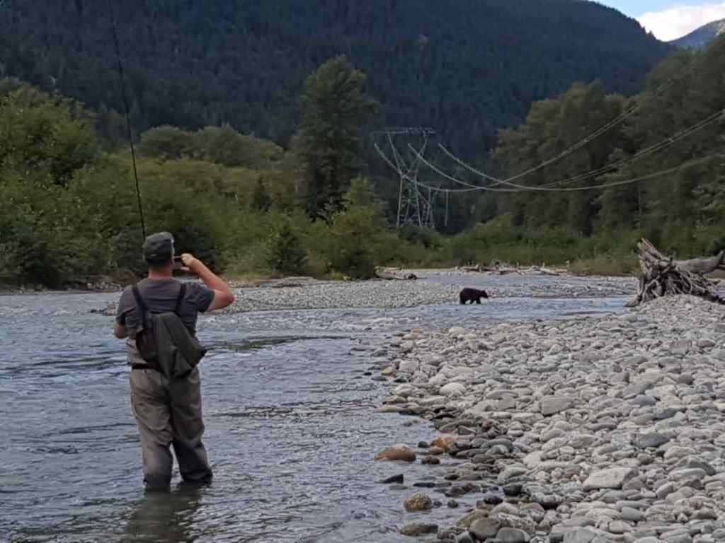 Black bear crossing Birkenhead River