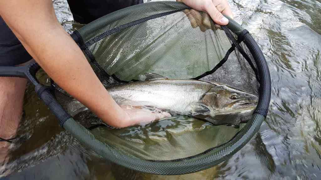 Fly fishing guides in Whistler