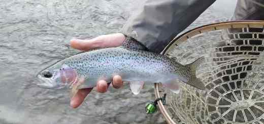 Winter fly fishing in Pemberton BC Canada