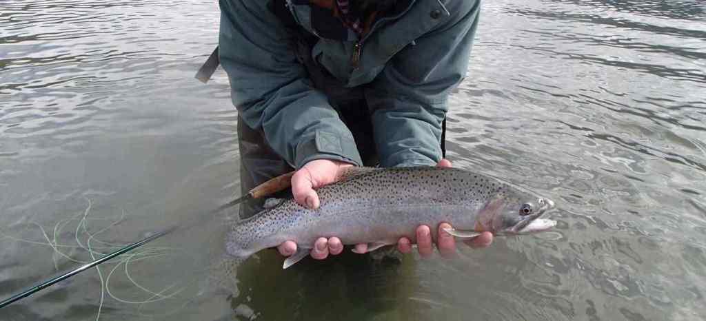 Fly fishing in Pemberton BC
