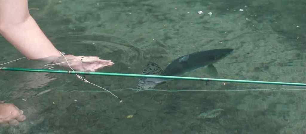 Salmon fly fishing trips
