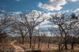 Landscape, Mala Mala