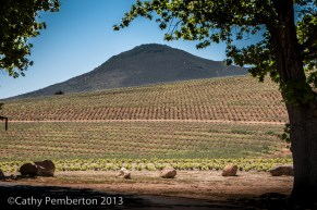 Kanonkop Estate, wine tasting, Cape Town