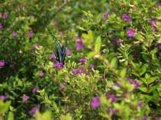 Kupu-kupu pun merasakan atmosfir kegembiraan kami