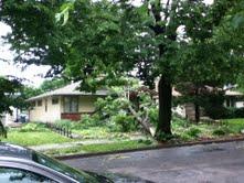tree storm 3