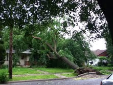 tree storm 4