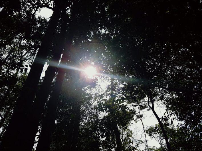 Kopi Hutan Penang Hill Cafe